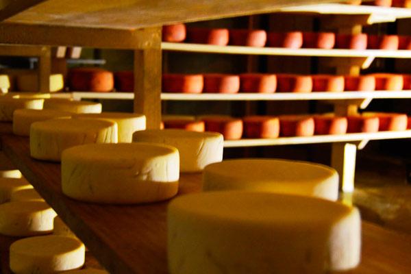 recorridos-queso-y-vino-qro-foto6